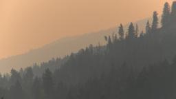 HD2009-8-1b-22 forest fire smoke and haze Footage