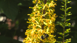 HD2009-8-5-1 flowers and bee Stock Video Footage