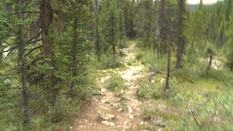 HD2009-8-6-6 walking in forest Stock Video Footage