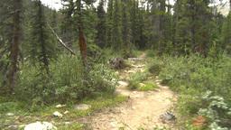 HD2009-8-6-6 walking in forest Stock Video Footage
