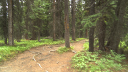 HD2009-8-7-2 walking through forest Stock Video Footage