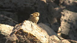 HD2009-8-21-9 pika Footage