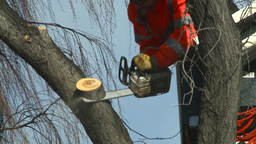 HD2009-1-9-20 arborist chainsaw bucket lift cut Footage