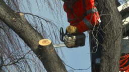HD2009-1-9-20 arborist chainsaw bucket lift cut Stock Video Footage