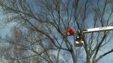 HD2009-1-9-22 Arborist Handsaw Bucket Lift Cut stock footage