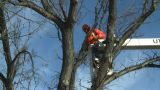 HD2009-1-9-24 Arborist Handsaw Bucket Lift Cut stock footage