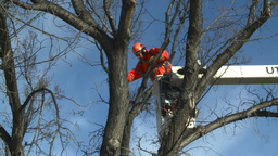 HD2009-1-9-24 arborist handsaw bucket lift cut Footage