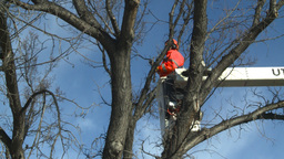 HD2009-1-9-24 arborist handsaw bucket lift cut Stock Video Footage