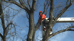 HD2009-1-9-24 arborist handsaw bucket lift cut Stock Video Footage