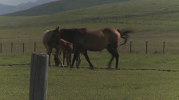 HD2009-7-10-8RC horses and colts Stock Video Footage