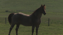 HD2009-7-10-12RC horse follow Stock Video Footage