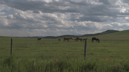 HD2009-7-10-14RC horse and colts clouds Stock Video Footage