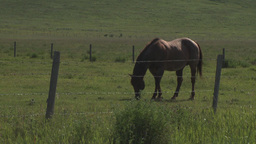 HD2009-7-10-18RC horse and colts x2 Stock Video Footage