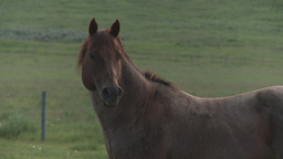 HD2009-7-10-20RC horse trot Footage