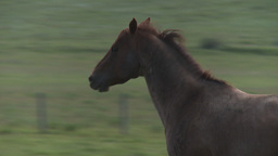 HD2009-7-10-20RC horse trot Stock Video Footage