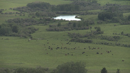 HD2009-7-10-28RC cattle at bottom of valley Stock Video Footage