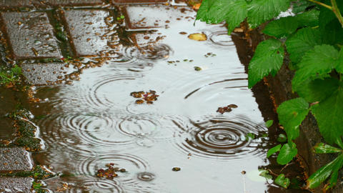 Summer rain Footage