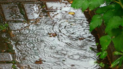 Summer Rain stock footage