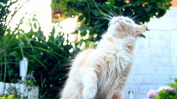 Cat Playing In The Garden stock footage