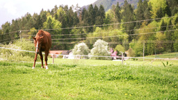 Small Village With Horse Grazing stock footage