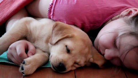 Labrador Puppy Sleeping With A Child stock footage