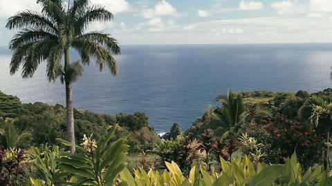 1080p, Garden Of Eden, Maui, Hawaii Footage