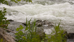 Wild Flooding River After Rain stock footage