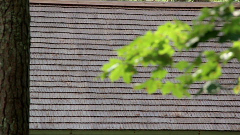 Leaves on the branch and wooden shingle roof from  Footage