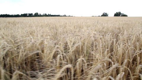 An open view of the large hay field Footage