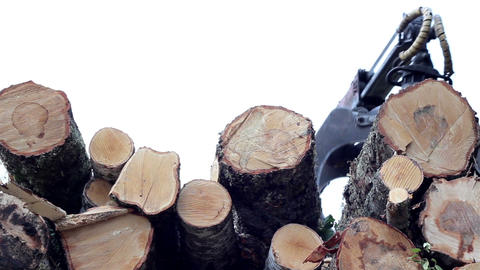 Birch logs loaded at the back of the truck while c Footage