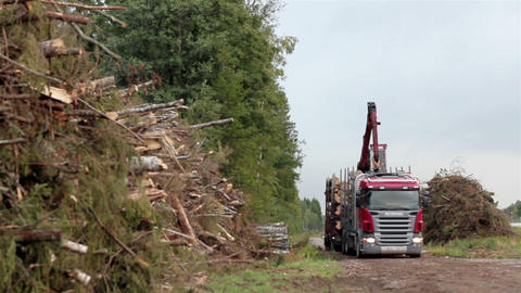 Truck busy loading trees at the side of the road Footage