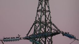 Electrical Tower With A Lot Of Birds stock footage