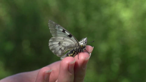Butterfly at Their Fingertips Footage