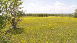 HD2009-6-11-2RC dandelion field Footage