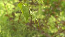 HD2009-6-17-13 rain leaves Stock Video Footage