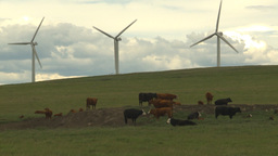HD2009-6-20-25 cattle and wind turbines on ridge Footage