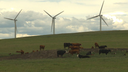 HD2009-6-20-25 cattle and wind turbines on ridge Stock Video Footage