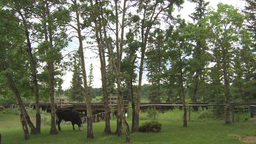HD2009-6-23-20 old steam train over trestle bridge with cows Stock Video Footage