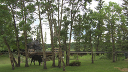 HD2009-6-23-20 old steam train over trestle bridge with cows Footage