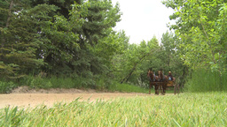 HD2009-6-24-2 western horse and buggy Stock Video Footage