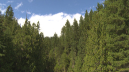 HD2009-6-22-16 tilt down reveal crazy creek water fal Stock Video Footage