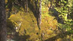 Mossy rockwall Stock Video Footage