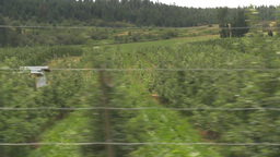 HD2009-6-22-48 fruit orchard drive Stock Video Footage