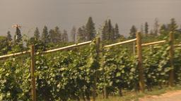 HD2009-6-26-3 vineyards Z Stock Video Footage