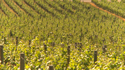 HD2009-6-26-7 vineyards Z Stock Video Footage