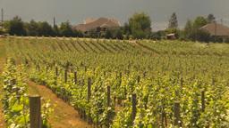 HD2009-6-26-7 vineyards Z Stock Video Footage