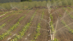 HD2009-6-26-11 strawberry field irrigation Footage