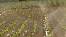 HD2009-6-26-11 strawberry field irrigation Stock Video Footage