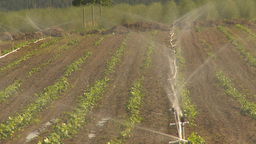HD2009-6-26-11 strawberry field irrigation Stock Video Footage