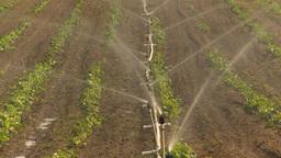 HD2009-6-26-12 strawberry field irrigation Z Footage